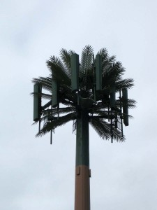 Nisemono_Royal_Palm